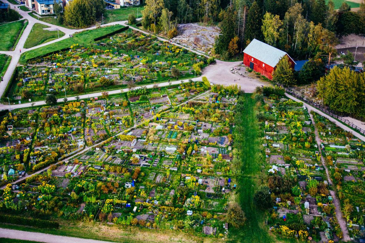 alotment garden