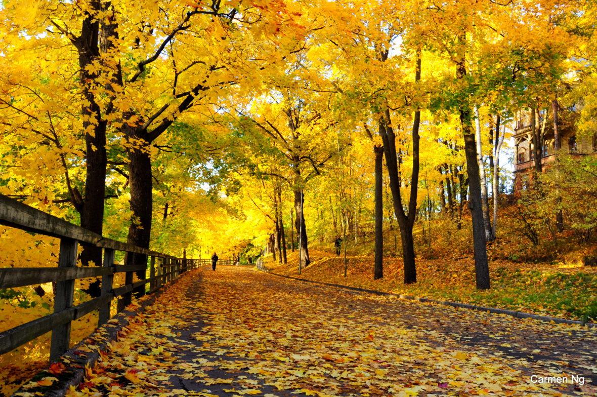 Autumn Töölönlahti