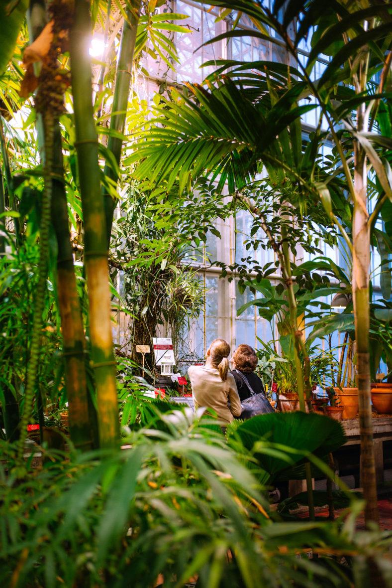 Kaisaniemi Botanical Garden Helsinki