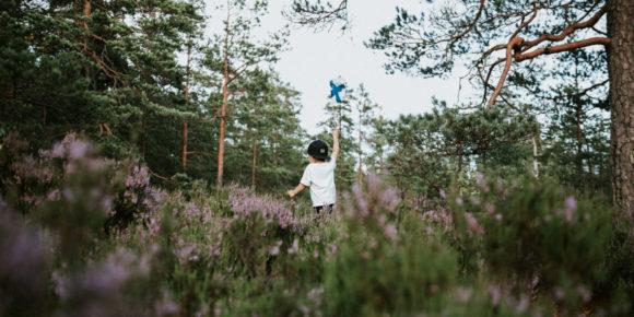 Haltia (c) Marjaana Tasala Visit Finland